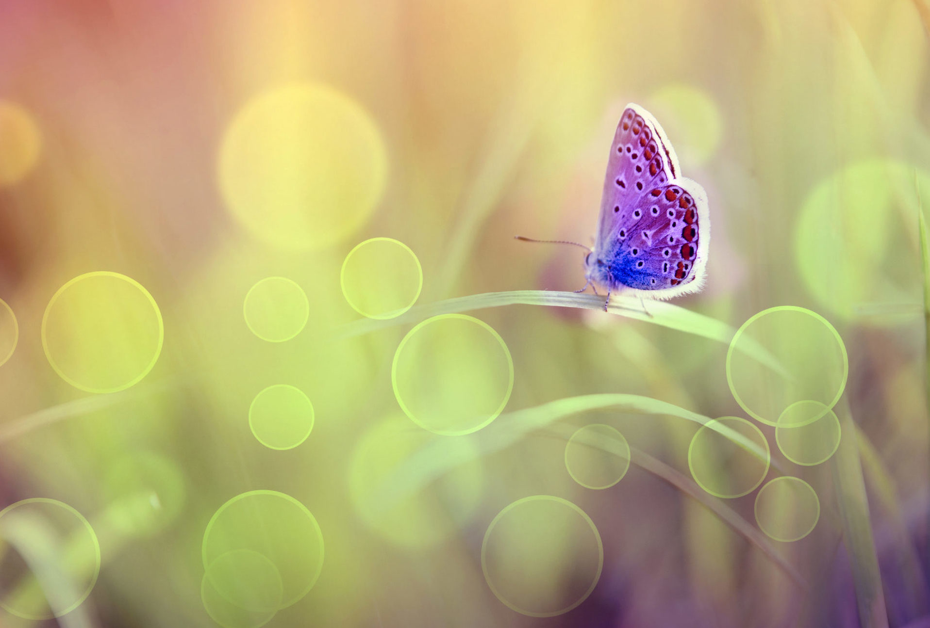 Butterfly sitting on grass