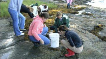 students at sea shore looking into tide pools