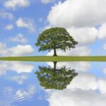tree with clouds and blue sky reflecting in still water with ripples